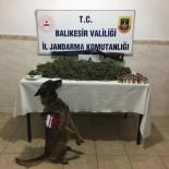 EDINCIK - Bandırma'da Uyuşturucu Operasyonu  Açıklaması 4 Gözaltı