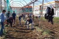 MUSTAFA CAN - Kumluca'da Öğrenciler Kışlık Sebze Ekimi Yaptı