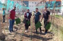 MUSTAFA CAN - MYO Öğrencileri Uygulamalı Kış Sebzesi Yetiştirme Eğitimi Yaptı