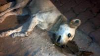 Çatalca'da 18 Sokak Hayvanının Zehirlenerek Öldürüldüğü İddiası