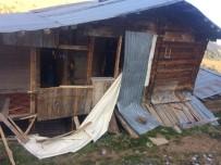 Artvin'de Yayla Evlerine Ayı Baskını