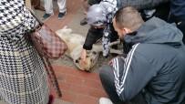 TAHTAKALE - Numaracı Köpek Vatandaşları Seferber Etti