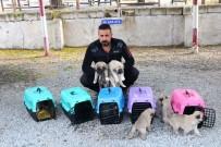 ALARM SİSTEMİ - Terörle Mücadelede Kangal Köpekleri Görev Alacak