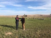 OVAKENT - Çoban Uyudu, Kayıp Olan Koyun Sürüsünü Jandarma Buldu