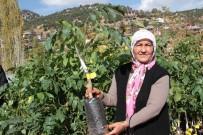 ET ÜRETİMİ - Mersin Büyükşehir Belediyesi'nden Kırsal Kalkınmaya Destek