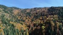 KISA FİLM YARIŞMASI - Türkiye'nin En Büyük Blok Ormanları Fotoğraf Tutkunlarını Bekliyor