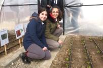 Öğrenciler Kendi Yaptıkları Serada Ekip, Biçip Meyve Ve Sebzeleri Tanıyorlar