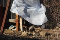DEMİR KORKULUK - Çığlıklarını Duyan Olmadı Açıklaması 5 Yaşındaki Çocuğun Feci Ölümü