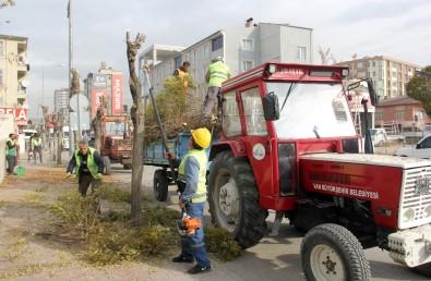 Van'da Ağaç Budama Ve Temizlik Çalışması