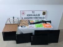 Konya'da Jandarmadan Kumar Operasyonu Açıklaması 2 Gözaltı
