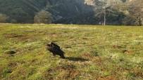 Munzur'da Bulunmuştu, O Kara Akbaba İyileşti Doğaya Bırakıldı