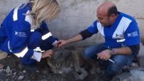 KURTARMA OPERASYONU - Şehirler Arası Köpek Kurtarma Operasyonu