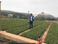 EROZYON - Bingöl'de Bu Yıl 1 Milyon Fidan Üretildi