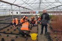 TAFLAN - Kışın Üretilen Bitkiler Baharda Toprakla Buluşuyor