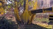 EROZYON - Yeni Yusufeli Yerleşim Yeri Ağaçlandırılıyor