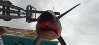 BEŞEVLER - Balıkçıların Ağına 200 Kiloluk Köpek Balığı Takıldı
