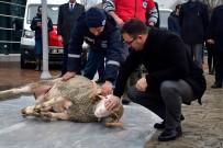 DAMPERLİ KAMYON - Yeni Hizmet Araçları İçin Kurban Kesildi