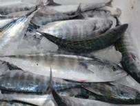 BÜLENT KORKMAZ - Başkentte balıkçılara şafak baskını!