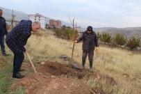 FERİBOT İSKELESİ - Çemişgezek'te 2 Bin Dut Fidanı Toprakla Buluşturuldu
