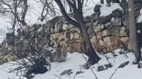 Tunceli'de Koruma Altındaki Vaşak Görüntülendi