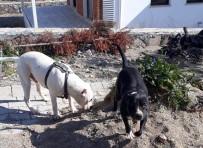 Gömeç'te Köpek Operasyonu
