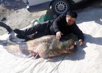 Manisa'da 100 Kilogramlık Yayın Balığı Yakalandı