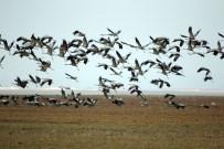 Turnalar, Seyfe Gölünde Kuyruğa Girdi