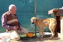KÖPEK OTELİ - Köpek Oteli Açtı, Yaralı Ve Hasta Sokak Hayvanlarından Müşterilere Yer Kalmadı