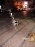 O İlçede Başıboş Köpek Tedirginliği
