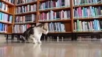 İSMAIL KORKMAZ - Halk Kütüphanesinin 'Sevimli' Misafirleri
