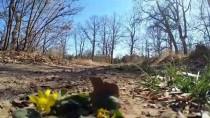 Ağaç Sevgisi 'Çoban Cevdet'i' Ormanların Kahyası Yaptı