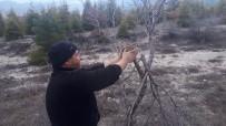 ESKIGEDIZ - 8 Yıldır Yol Kenarındaki Ağaçları Gönüllü Aşılıyor