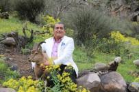 TÜRKÜCÜ - Dağ keçisiyle kamera karşısına geçti