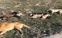 BEYTEPE - Ankara'da 4 Köpek Daha Zehirlenerek Telef Edildi