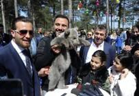 İGUANA - 60 Türden 450 Adet Hayvan Macera Parkında