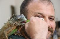 İGUANA - (Özel) 5 Yıldır Beslediği İguana En Yakın Arkadaşı Oldu