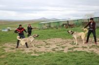 CAMBAZ - Çakma Kangallara Dikkat