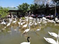 (Özel) 'Flamingolu Köy' Anneler Günü'nde Ziyaretçi Akınına Uğradı