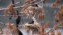 HÜSEYIN TEKIN - 'Saklı Cennet'te Kuş Sayısında Rekor Artış