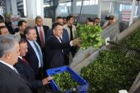 HAYATİ YAZICI - Bakan Pakdemirli Rize'de Çay Fabrikalarını Gezdi