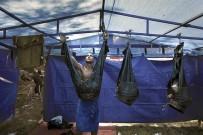 HÜSEYIN TÜRK - Kırkpınar'ın En Güzel Fotoğrafı 'Kispet' Oldu