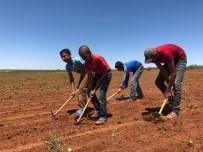 Konya'da Tarım İşçileri Ekmek Kavgasını Sıcak Altında Sürdürüyor