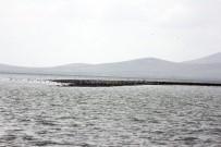 Martılar Su Seviyesi Artan Seyfe Gölü'ne Akın Etti