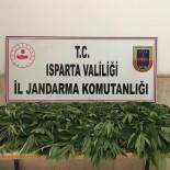 Jandarma'dan Kenevir Operasyonu Açıklaması 1 Gözaltı