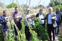 KARAAHMETLI - Dolu, Turfanda Ürünleri Vurdu