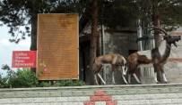 MOLLAKÖY - (Özel) Erzincan'da Şifalı Su