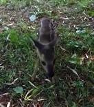 Yavru Karacalar, Fındık Bahçesinde Bulundular