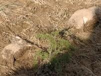Kırşehir'de Sele Kapılan Koyunlar Telef Oldu