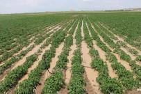 KEMERHISAR - Niğde'de patates tarlaları su altında kaldı