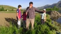 MEHMET ALKAN - Sürgü Barajı'nda Korkutan Balık Ölümleri